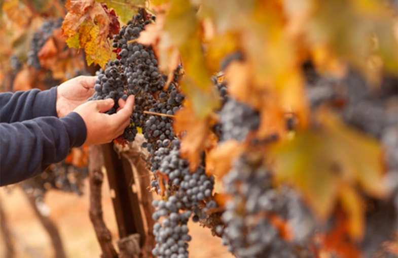 Burgundy winemaking weekend