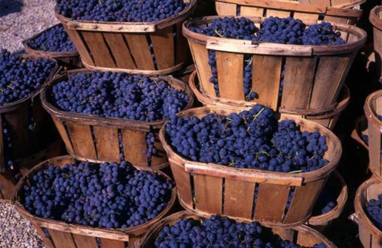 Bordeaux wine break