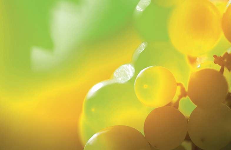 Wine-tasting weekend Riquewihr