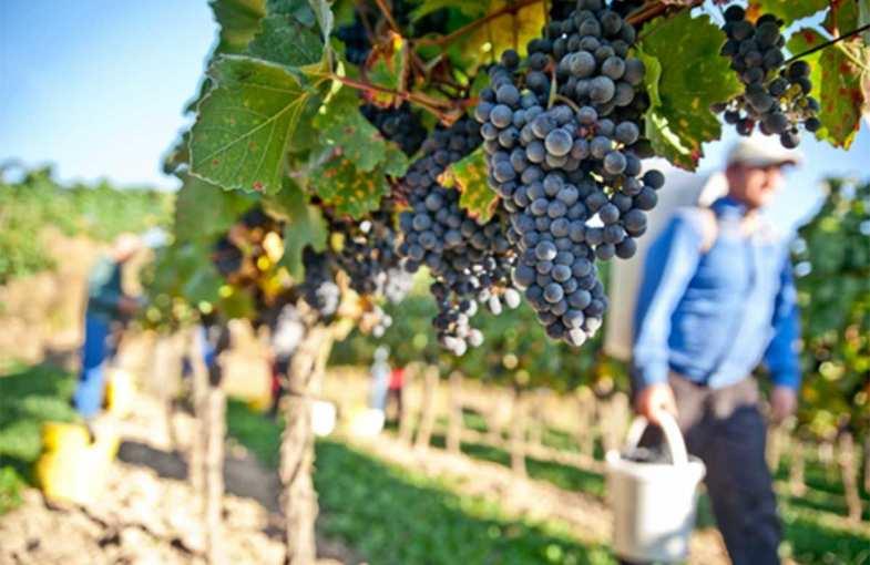 Séjour vigneron à Beblenheim