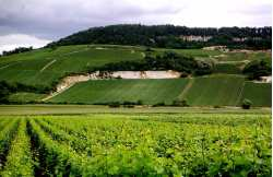 Discover the Champagne region