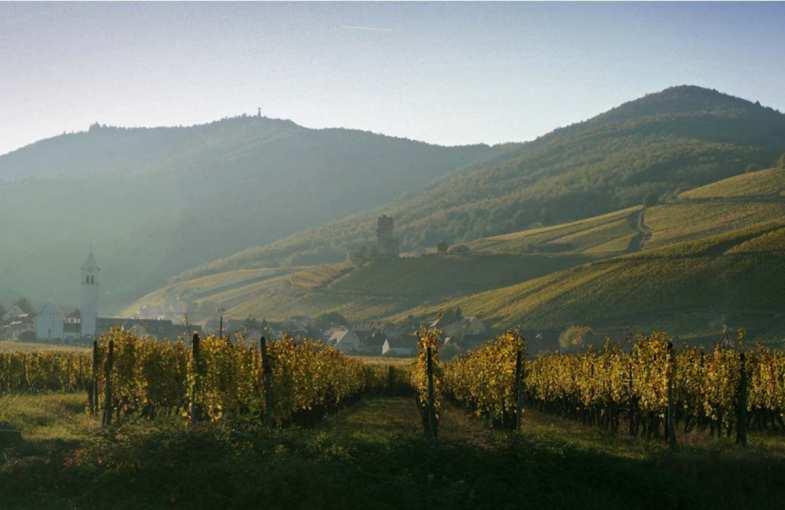 Cadeau dégustation - Route d'Alsace