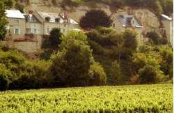 Loire vineyard tour