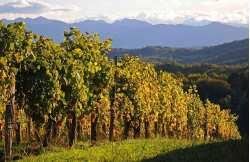 Escapade viticole Madiran Jurançon