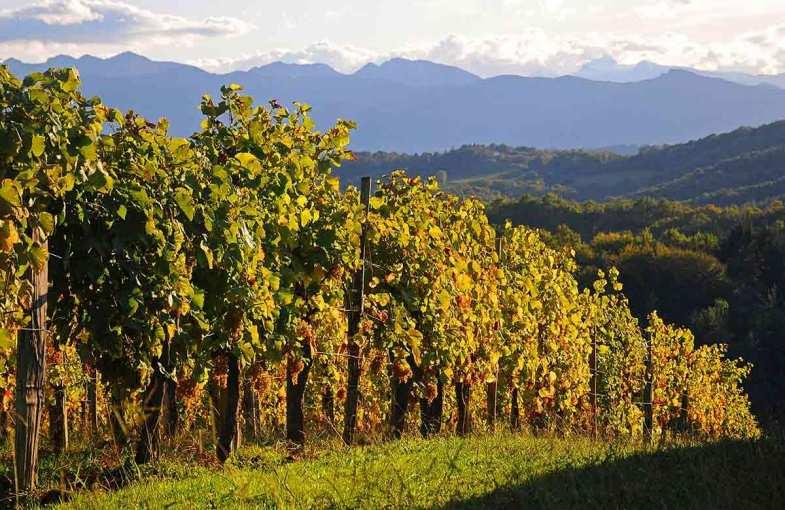 Wine escape in Madiran and Jurançon