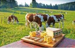 Escapade gastronomique Jura
