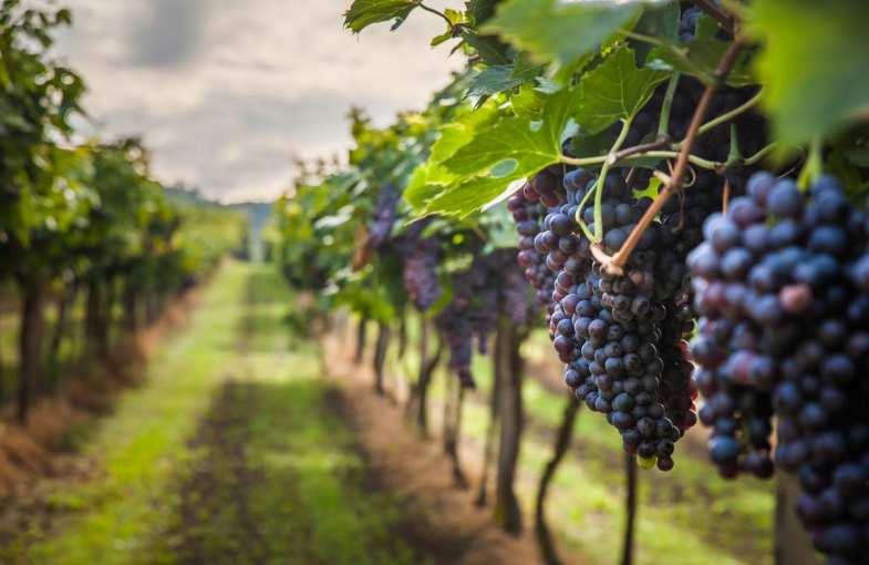 Wine break near Suze-la Rousse