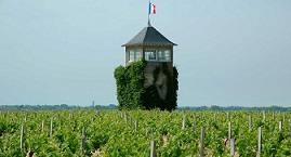 Medoc vineyard