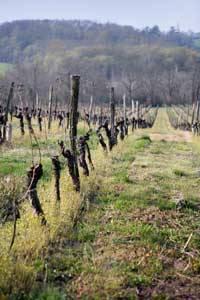 Vigneron Pessag-Leognan