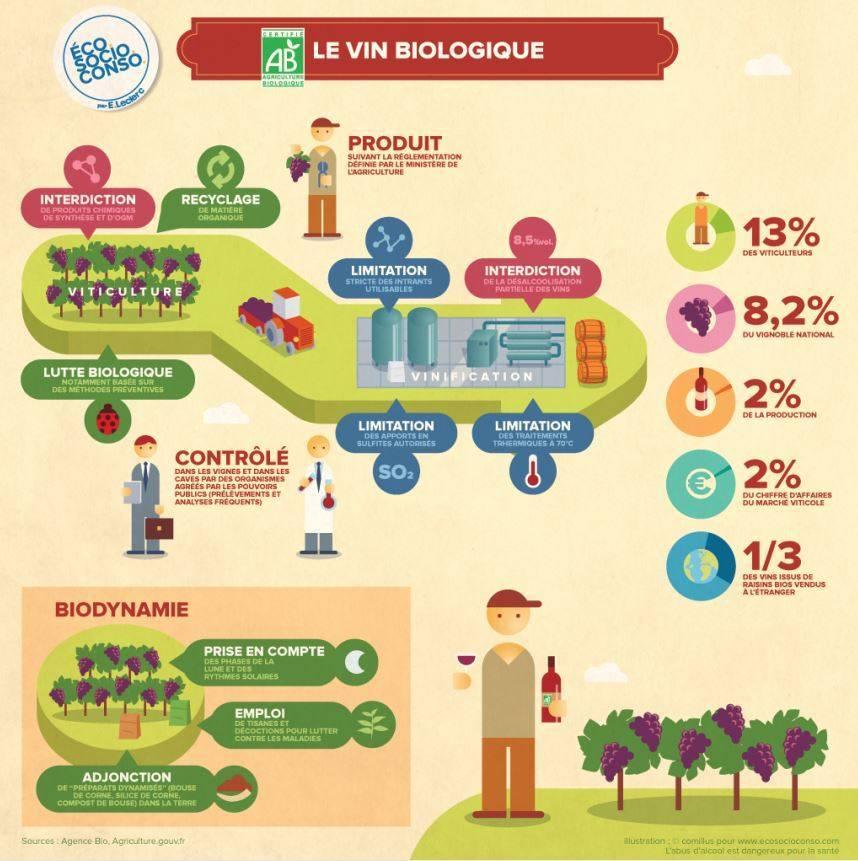 Infographie du vin bio