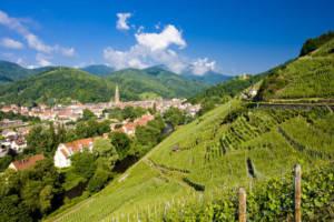 Quiz vins Alsace