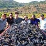 Le domaine Grand Guilhem en Languedoc-Roussillon