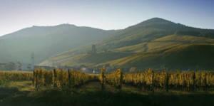 Dégustations inédites sur la route des vins d'Alsace