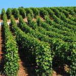 Qu'est-ce qu'un terroir… viticole ?