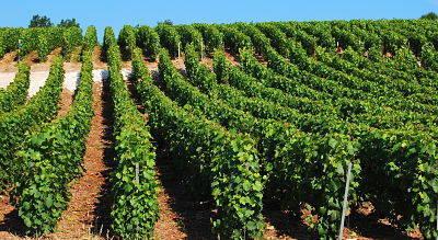 Terroir viticole