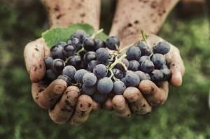fr blog un vin naturel