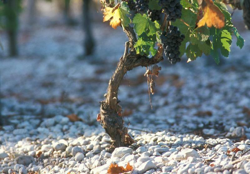 Terroir des vins Graves
