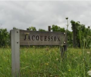 Vignes - Domaine Jacquesson