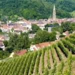 Le Rangen, un Grand Cru d'Alsace méconnu