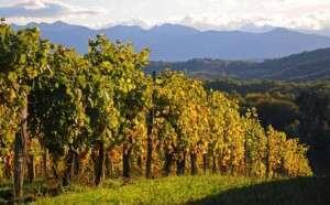 Madiran, l'incontournable de la route des vins du sud-ouest