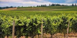Route des vins du Mâconnais – Beaujolais