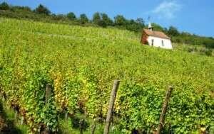 En voiture sur la route des vins