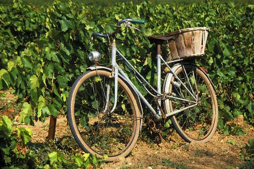 Week-end dégustation vins biologiques bordeaux