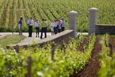Visit Côte de Beaune vines