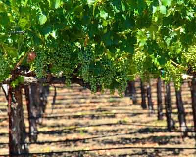 Circuit route des vins Provence