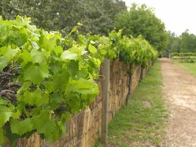 Circuit route des vins du Beaujolais