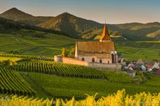 Vignes Grans Crus d'Alsace