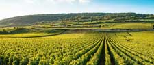 Séjour viticole Bourgogne
