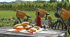 Bike ride and tastings in the vineyard of Champagne