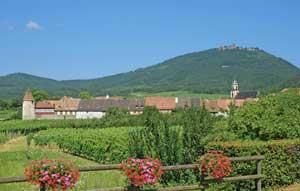 Séjour atelier vignerons Alsace