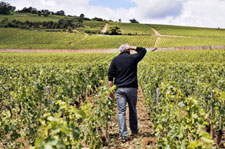 Climat - Vignoble bourguignon
