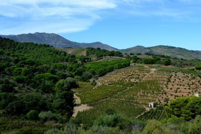 Randonnées vignoble Languedoc-Roussillon