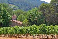 Romance viticole en Languedoc
