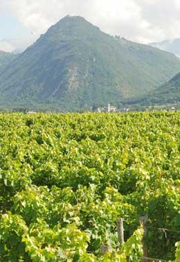 Route des vins de Savoie