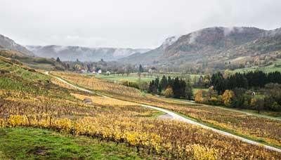 Route des vins du Jura