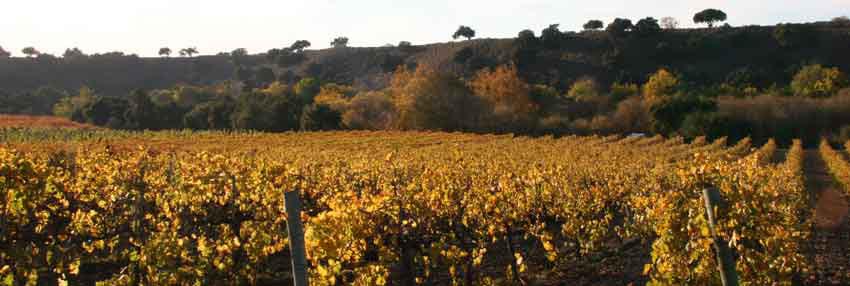 Route des vins du Sud-Ouest