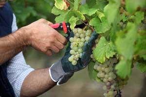Atelier vignerons sur les routes d'Alsace