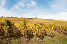 Visite et dégustation de vin - Alsace