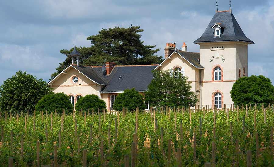 Château Soucherie sur l'appellation Savennières