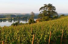 Weekend box in the Loire vineyard