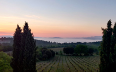 Domaine du Deffend, organic wine estate in Provence