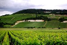 Domaine Jacquesson - Champagne