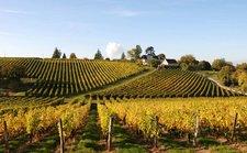 Domaine viticole Touraine