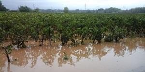 Vignoble Languedoc-Roussillon, inondations