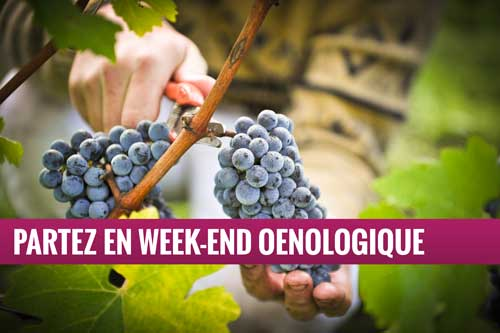 Oenologie - Week-end vin