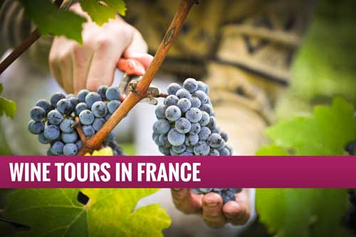 Oenology - Wine Tours